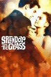 Великолепие в траве / Splendor in the Grass