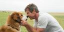 «Собачья жизнь»: режиссер «Хатико» снял кино о сансаре песиков