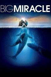 Постер Все любят китов