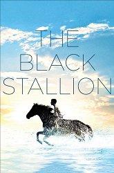 Постер Черный конь