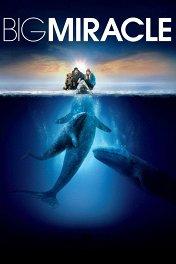 Все любят китов / Big Miracle