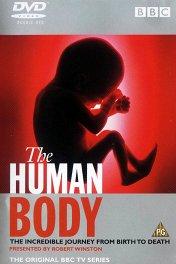 Тело человека / The Human Body