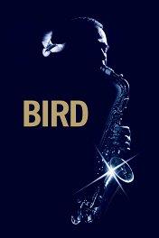 Птица / Bird