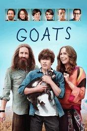 Козы / Goats