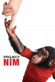 Проект «Ним» / Project Nim