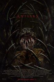 Оленьи рога / Antlers
