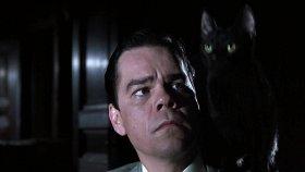 11 фильмов с демоническими котиками