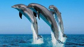 Фильмы про дельфинов, косаток и китов