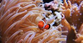 Океанариум — Морской аквариум на Чистых прудах