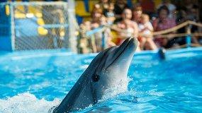 Шоу дельфинов и морских львов