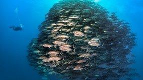 V Фестиваль подводной фотографии «Дикий подводный мир-2019»