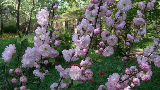 XV Весенний фестиваль цветов