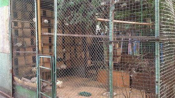 Двор-зоопарк