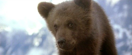 Медведь (L'ours)