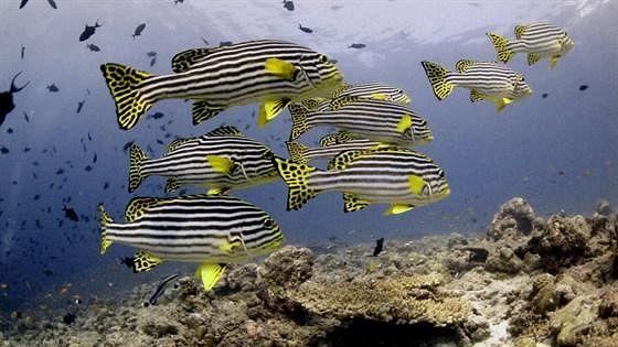 Коралловый риф — от планктона до акул
