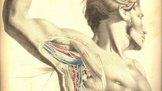 Анатомия-2 (Anatomie 2)