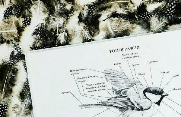 Новые и интересные тематические энциклопедии для детей