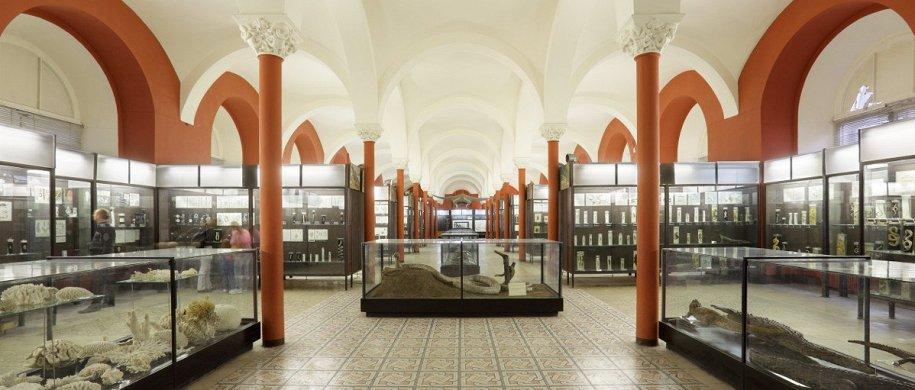 Где смотреть на насекомых: 7 музеев и кружков