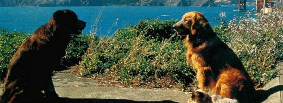 Кино: «Долгая дорога домой-2: Потерянные в Сан-Франциско»
