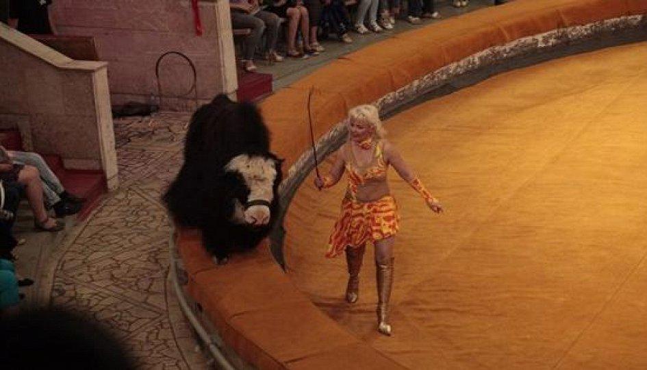 Театр: Тибетские яки и карнавал животных