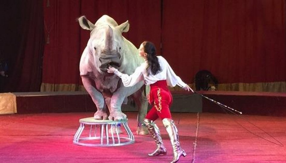 Театр: Цирк больших зверей