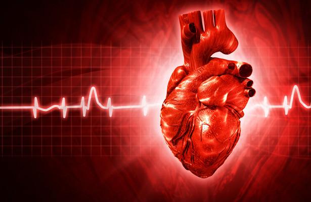 Если сердце— этомышца, топочему ононеустает