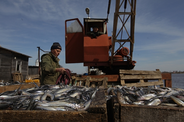 Китай отказался отроссийской рыбы