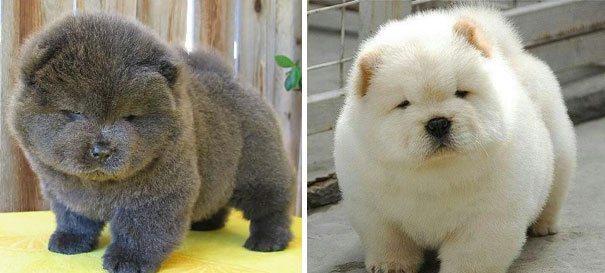 Картинки по запросу пухлые щенки