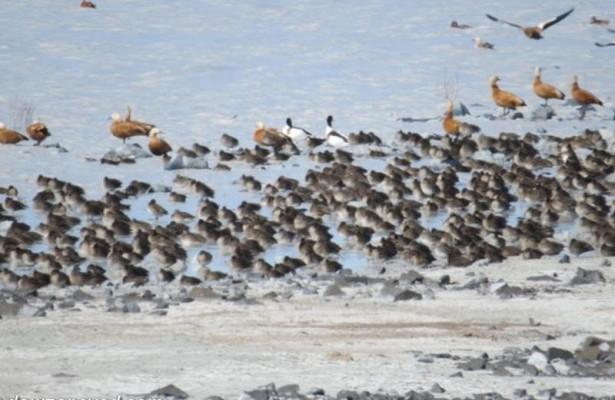 Экологи заявили обугрозе озерам вЗабайкалье из-застроительства плотины вМонголии