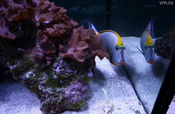 Каким должен быть идеальный аквариум
