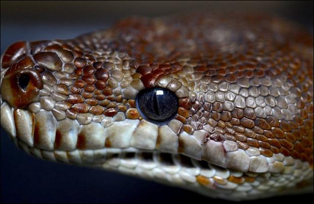 Ученые выявили новый способ передвижения змей