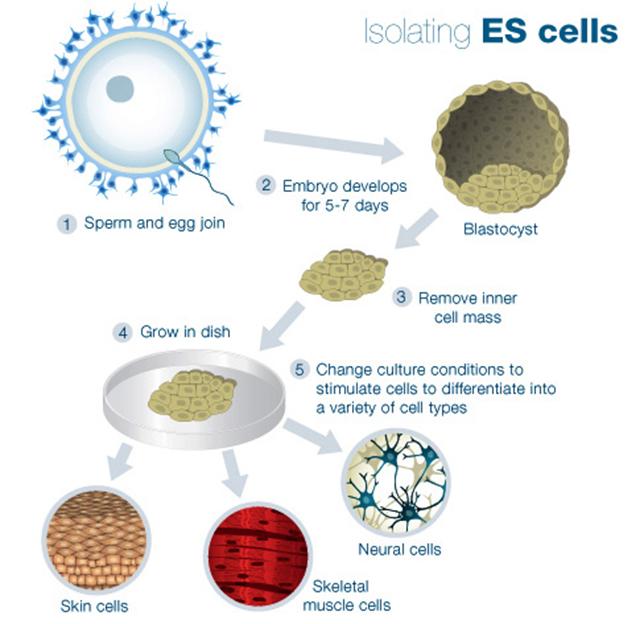 Stem cell paper