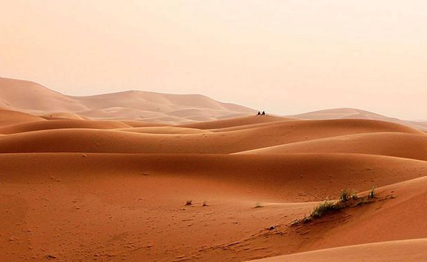 Ученые нашли сотни миллионов деревьев впустыне Сахара