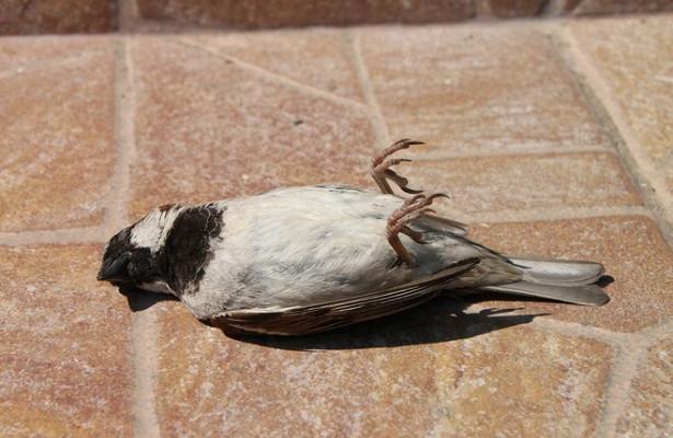 Вдвух странах Европы зафиксированы вспышки птичьего гриппа