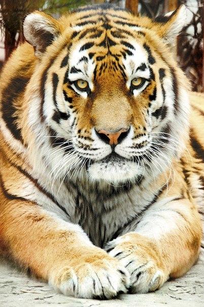 Speed Dating Tiger Tiger Londen