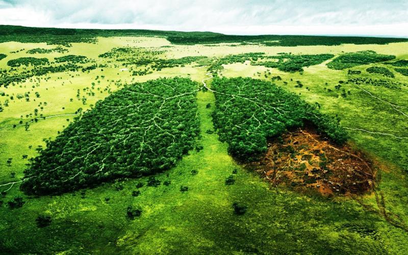 Землю в остров Цивили для сельского хозяйства